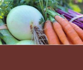 Ernährungsorientierte Gesundheitsförderung